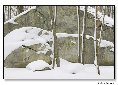 Winter woods and rock, Lincoln Woods State Park, Lincoln, Rhode Island